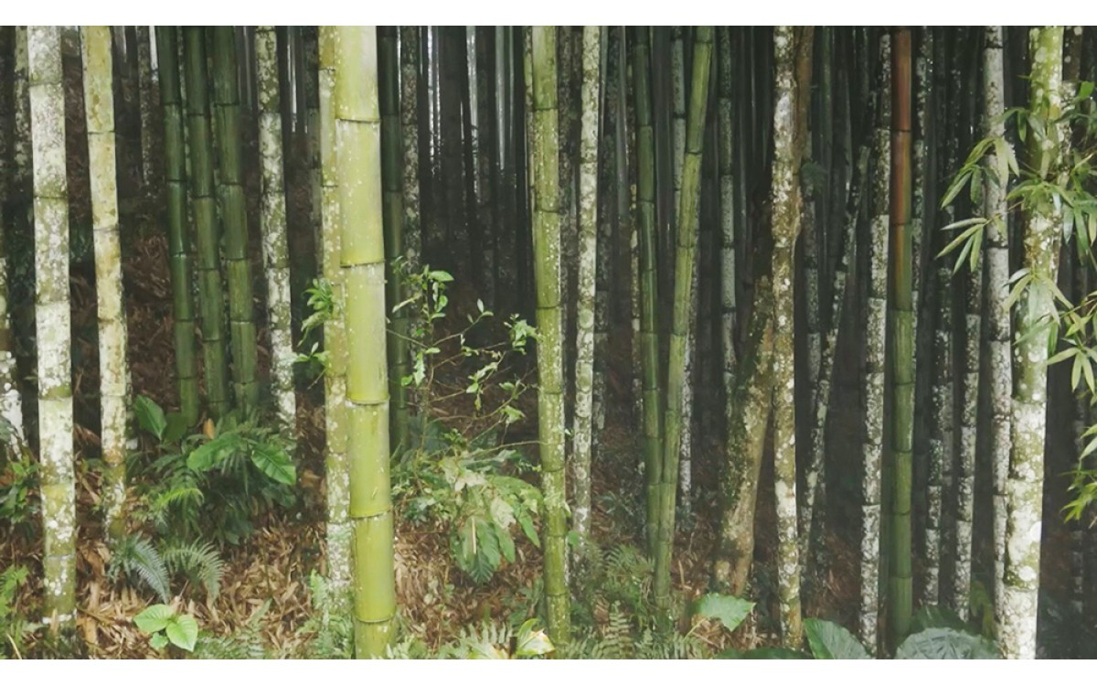 Experience to go hunting bamboo shoots in the forest